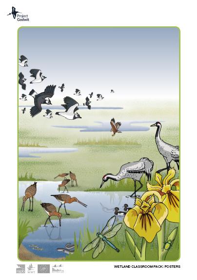 Fen wetland
