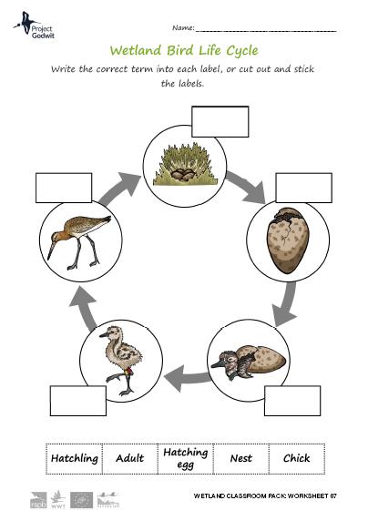 07: Life cycle (2)