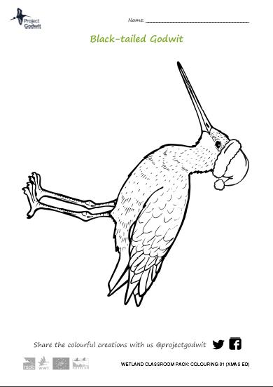 Colouring: godwit