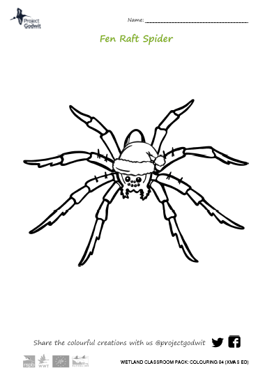 Colouring: spider