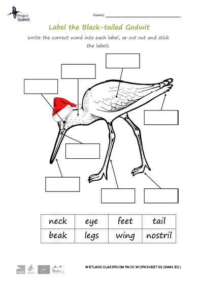 09b: Bird anatomy (1)