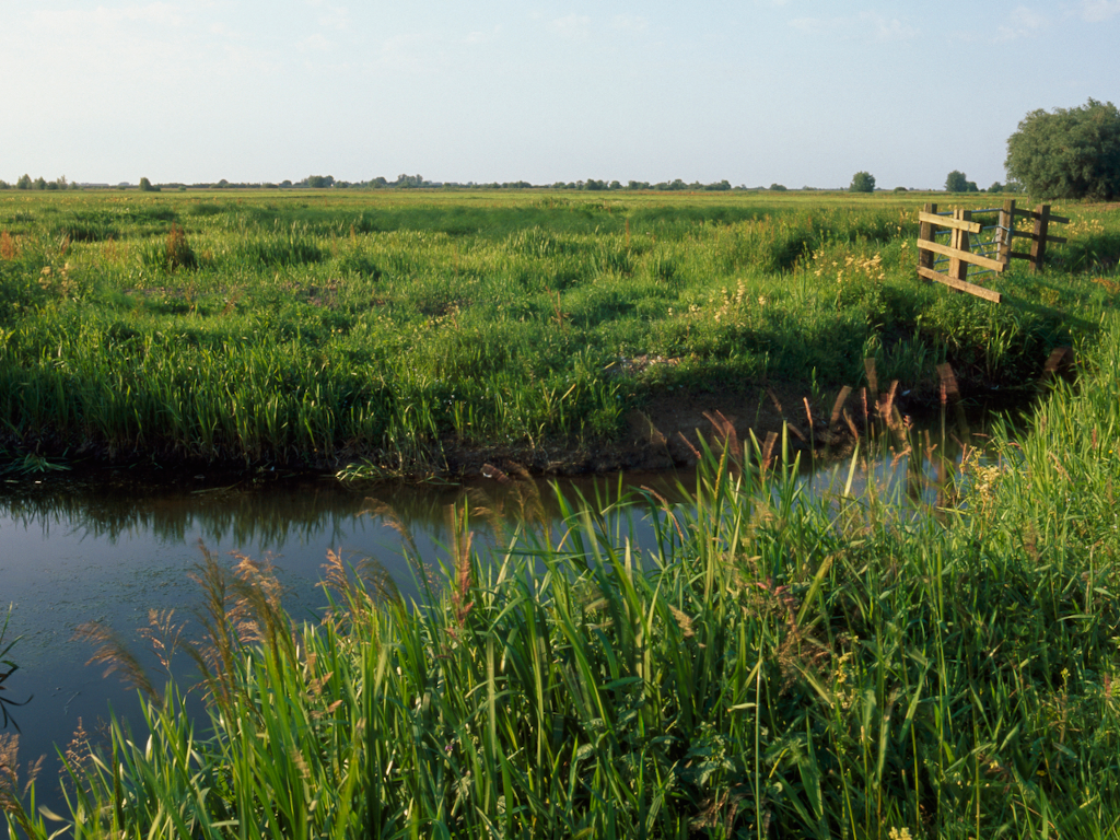 Ouse Washes. Photo by Andy Hay/RSPB.